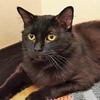 Adopt A Pet :: Cooper - Walworth, NY