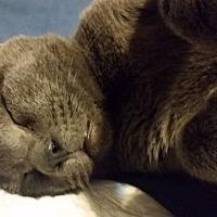 Adopt A Pet :: Stormy - Orlando-Kissimmee, FL