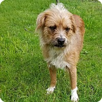 Adopt A Pet :: Benny - Danbury, CT