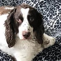 Adopt A Pet :: OH/Brody - Walton, KY