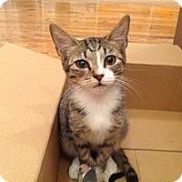 Adopt A Pet :: Egon - Brooklyn, NY