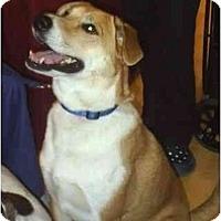 Adopt A Pet :: Ginger - cedar grove, IN