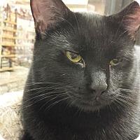Adopt A Pet :: Tom & Fuzzy Butt - Chesapeake, VA