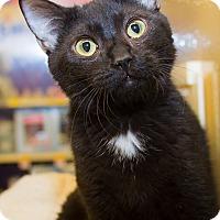 Adopt A Pet :: Stuey - Irvine, CA