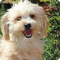 Adopt A Pet :: Freddie - Burbank, CA