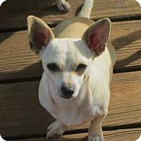 Adopt A Pet :: CHIQUITA - Brookside, NJ
