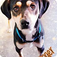 Adopt A Pet :: Booger - Odessa, TX