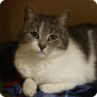 Adopt A Pet :: Rhubarb - Kettering, OH