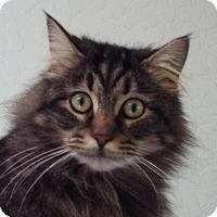 Adopt A Pet :: Athena - Grants Pass, OR