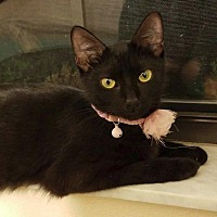 Adopt A Pet :: Brooklyn - Ocala, FL