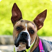 Adopt A Pet :: Duckie - Portland, OR