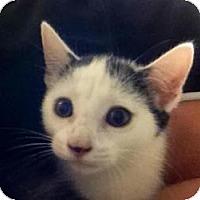 Adopt A Pet :: Selena - Winter Haven, FL
