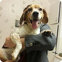 Adopt A Pet :: Mac - Hamilton, ON