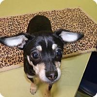 Adopt A Pet :: Rory - Muskegon, MI
