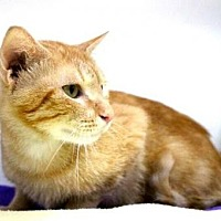 Adopt A Pet :: Soloman - Sebastian, FL