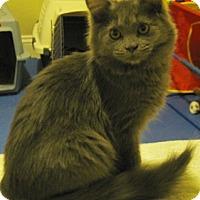 Adopt A Pet :: Juliette - North Highlands, CA