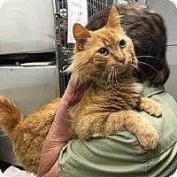 Adopt A Pet :: Kingsville - McDonough, GA