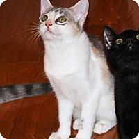 Adopt A Pet :: Max - Morganton, NC