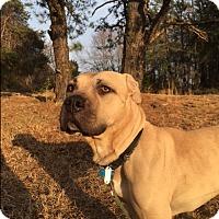 Adopt A Pet :: Deuce - Media, PA