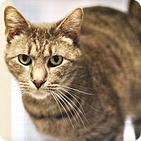 Adopt A Pet :: Ferris Mewler - Lincoln, NE
