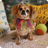 Adopt A Pet :: Teddy Bear - Benton, LA