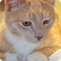 Adopt A Pet :: Lucky E - Warren, MI