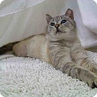 Adopt A Pet :: Picatso - Fredericksburg, VA
