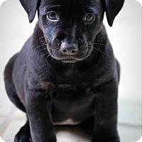 Adopt A Pet :: Teegan - Ft. Lauderdale, FL