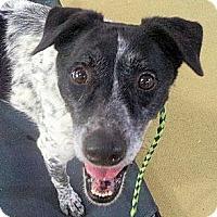 Adopt A Pet :: Hunter - Bergheim, TX
