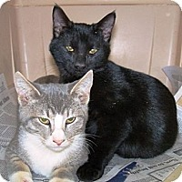 Adopt A Pet :: *Kittens fixed and free - Winder, GA