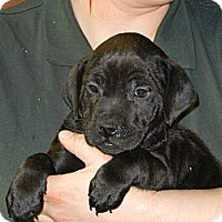 Adopt A Pet :: Vinnie - South Jersey, NJ