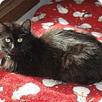 Adopt A Pet :: Jackie - Grand Rapids, MI
