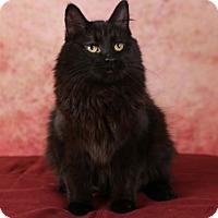 Adopt A Pet :: Stella - Eagan, MN