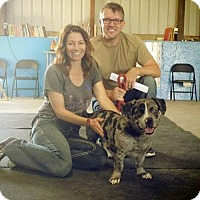 Adopt A Pet :: Diego - Sacramento, CA