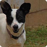 Adopt A Pet :: Olly - Lufkin, TX