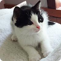 Adopt A Pet :: Vincent - N. Billerica, MA