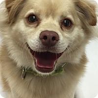 Adopt A Pet :: Dawson - Mission Viejo, CA