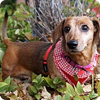 Adopt A Pet :: Maddie2 - Louisville, CO
