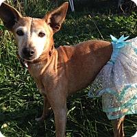 Adopt A Pet :: Tamsin - Cumberland, MD