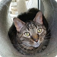 Adopt A Pet :: Gidget - Chambersburg, PA