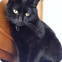 Adopt A Pet :: Boo - Novato, CA