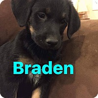 Adopt A Pet :: Braden - Mount Laurel, NJ
