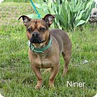 Adopt A Pet :: Niner - Yreka, CA