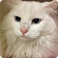 Adopt A Pet :: Nova - Salisbury, MA