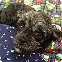 Adopt A Pet :: Kori - Denver, CO