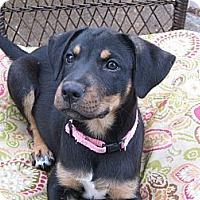 Adopt A Pet :: May - Humboldt, TN