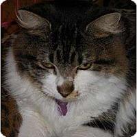Adopt A Pet :: Rose - Chesapeake, VA