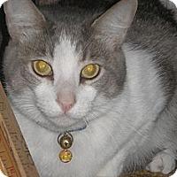Adopt A Pet :: Baxter - Laguna Woods, CA