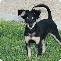 Adopt A Pet :: Sassy - California City, CA