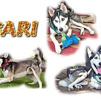 Adopt A Pet :: Bari - Seminole, FL